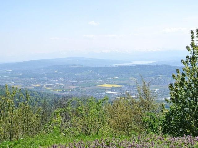 Aussicht von der Lägern Richtung Zentralschweiz.