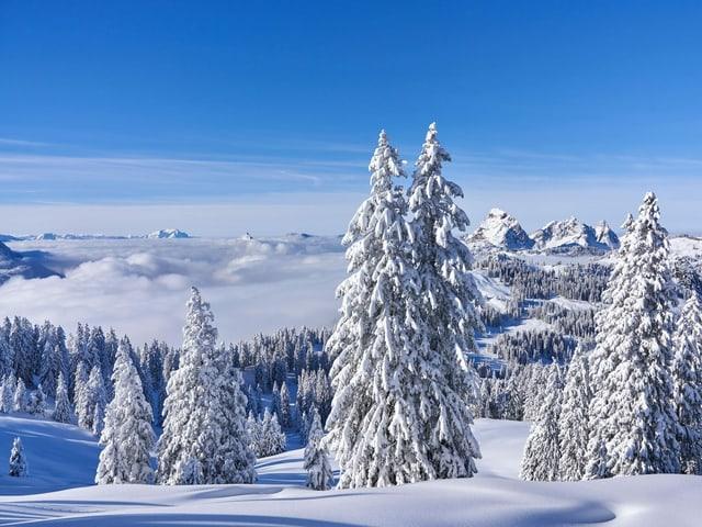 Verschneite Landschaft mit Tannen und blauem Himmel