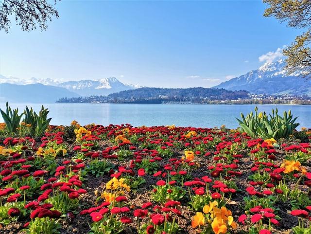 Im Vordergrund ein buntes Blumenmeer, im Hintergrund der See.