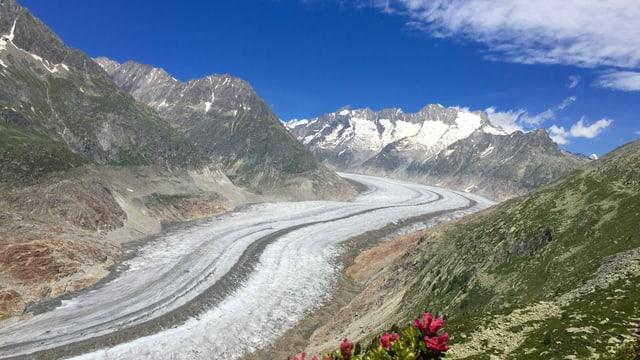 Blick auf den ausgeaperten Aletschgletscher.