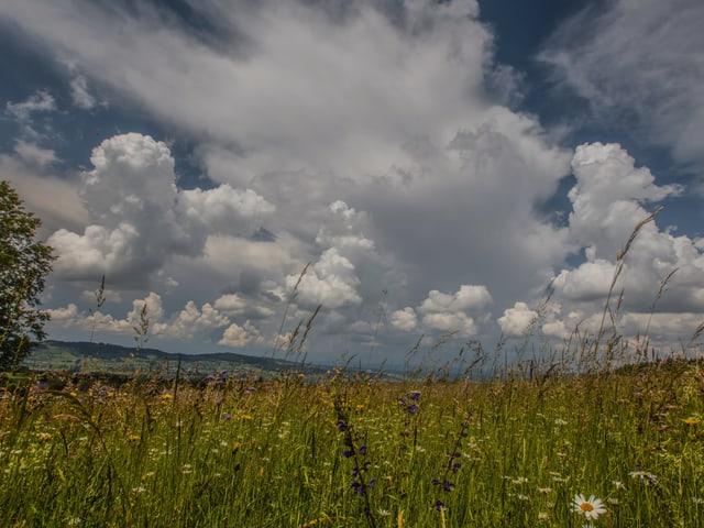 Quellwolken über einer Blumenwiese