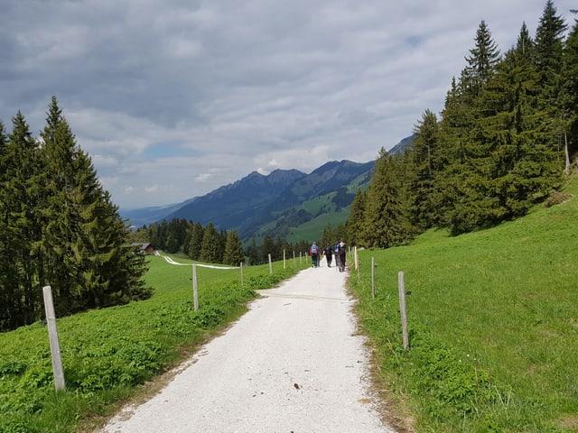 Feldweg in Frühlingslandschaft.