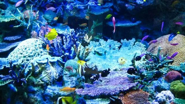 Video «Super Sinne der Tiere – Unter Wasser» abspielen