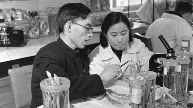 Das Schwarzweissfoto aus den 1950er-Jahren zeigt die preisgekrönte Pharmakologin Youyou Tu bei der Arbeit mit Professor Lou Zhicen