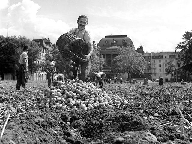 Kartoffelernte auf dem Sechseläutenplatz während des Zweiten Weltkrieges.