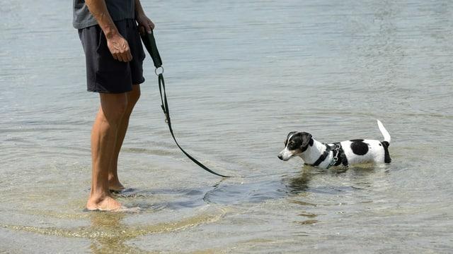 Mann und Hund stehen im Wasser.