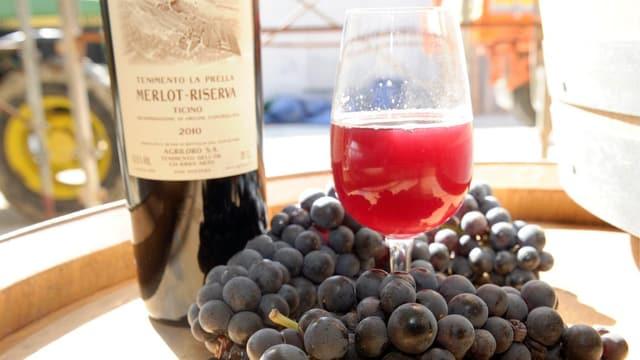 Reife Merlot Trauben mit einer Flasche Rotwein