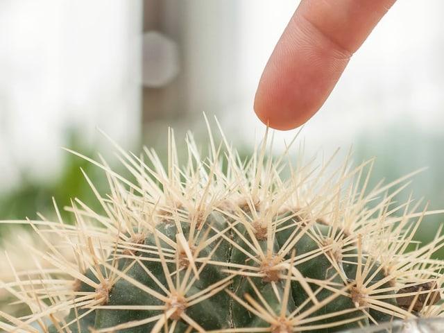 Ein Finger berührt einen Kaktus.