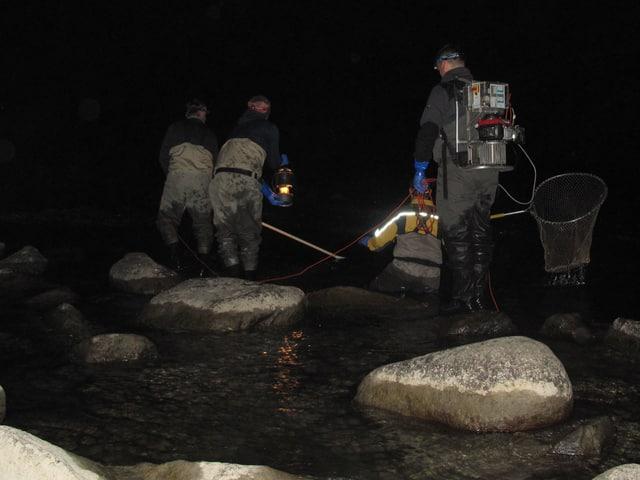 Werner Tresch und seine Helfer beim Laichfischfang  in der Reuss.