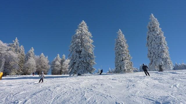 Schöne Skipiste auf dem Grenchenberg, verschneite Bäume, blauer Himmel