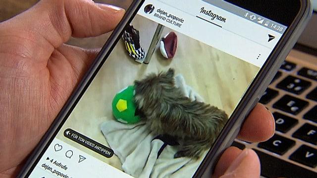 Eine Hand hält ein Smartphone mit einem Instagram-Katzen-Video.