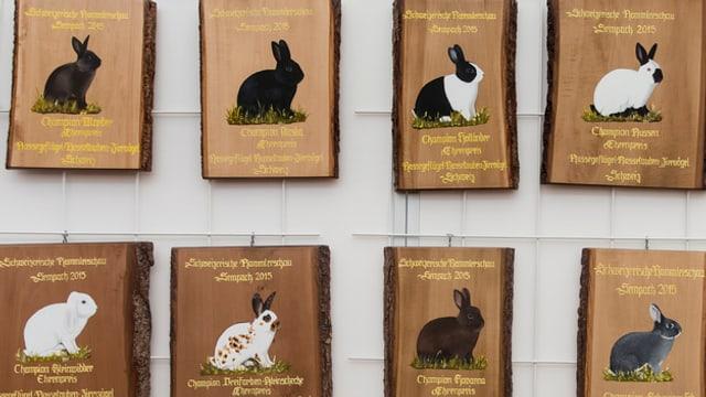 Tafel mit Bildern verschiedener Kaninchen.