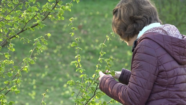 Daria Lehmann schaut sich die Blätter einer Hasel an
