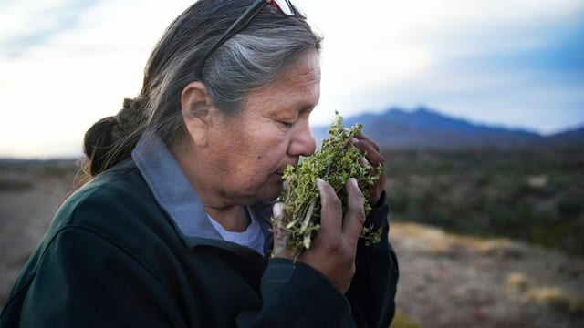 Indigene Frau riecht an Kräutern
