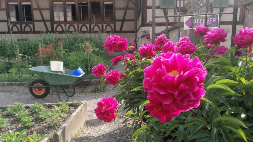 Über 120 verschiedene Pflanzen kann man im Laudato si'-Garten entdecken.