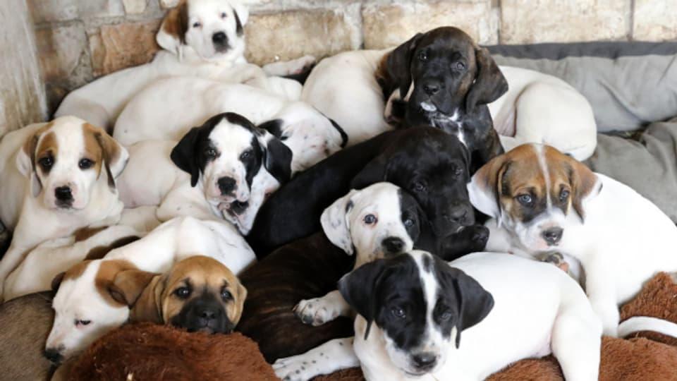 20 Hundewelpen sind derzeit im Basler Tierheim untergebracht