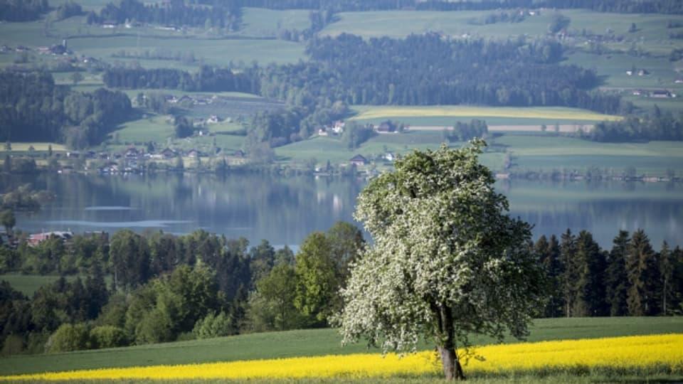 Die Region Sempachersee sichert die Trinkwasserversorgung für die Zukunft.