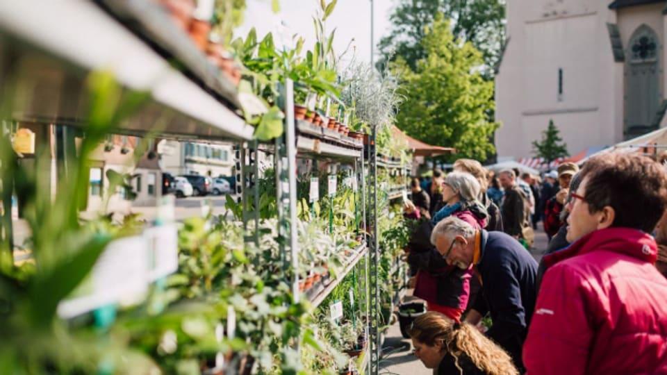 Kunden am Entlebucher Kräuter- und Wildpflanzenmarkt 2019 in Escholzmatt.