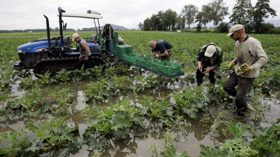 Nach den grossen Unwettern gibt es teilweise grosse Ernteausfälle.