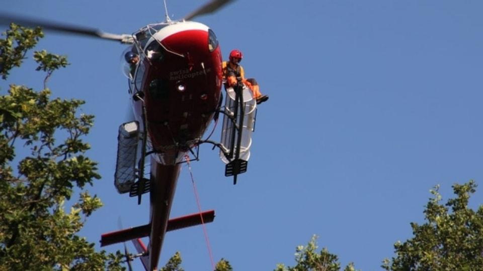 Der Helikopter bringt die Forscher zu den Baumwipfeln.