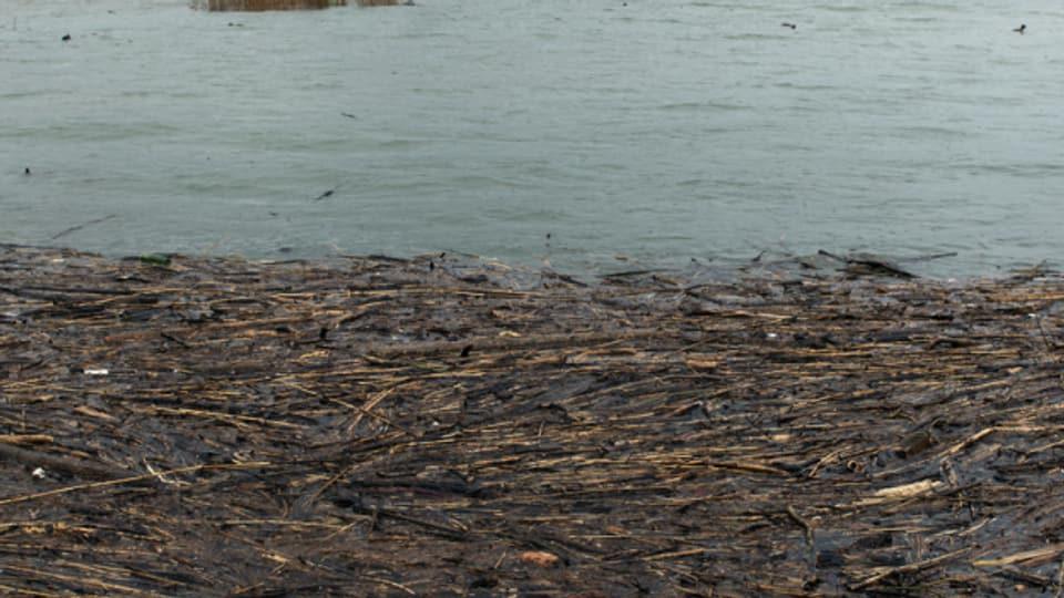 Im Rapperswiler Hafen sammelte sich viel Schwemmholz.
