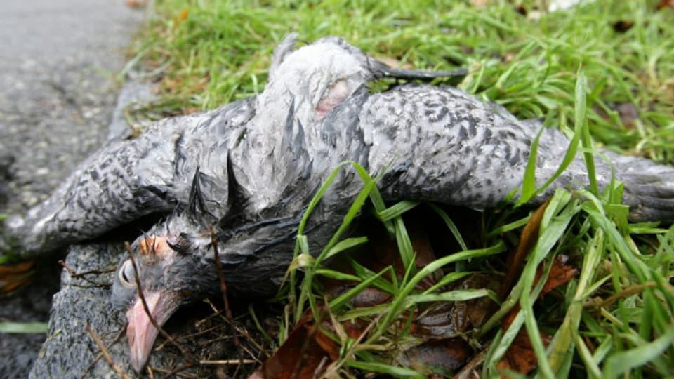 Heftiger Hagel gefährdet nicht nur Vögel, sondern auch andere Tiere.