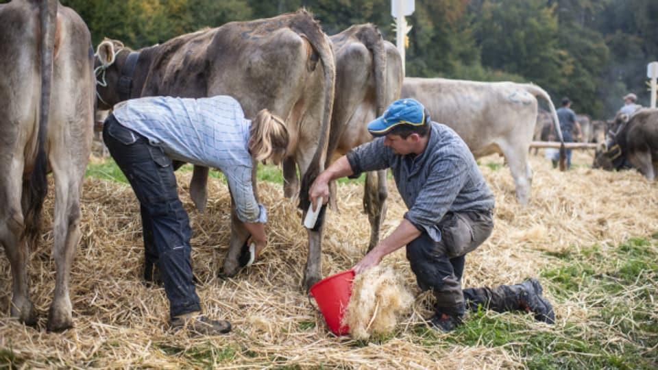 Bäuerinnen sind häufig ungenügend abgesichert (Symbolbild).