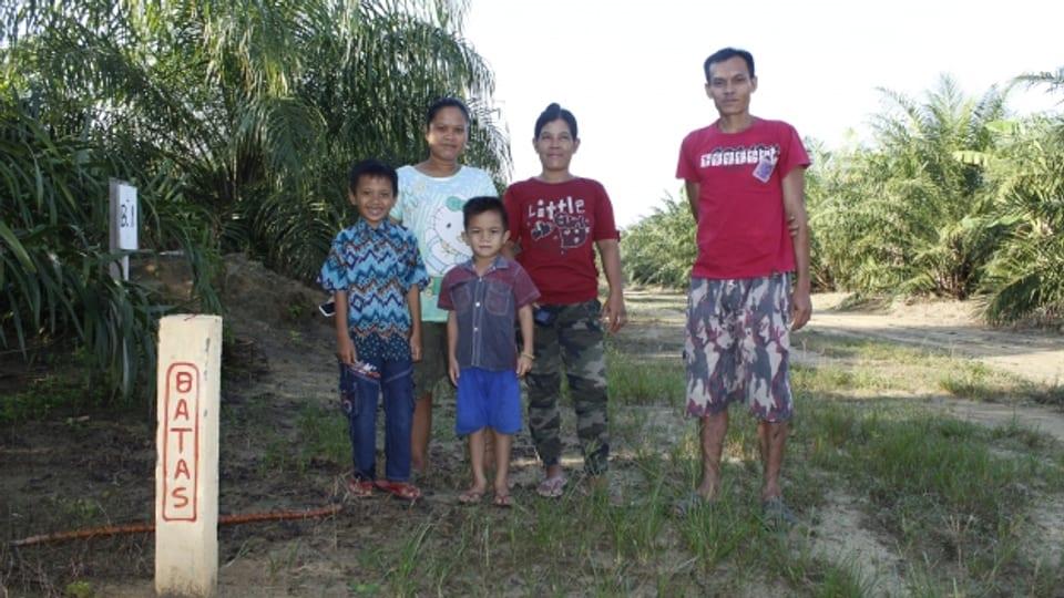 Palmas d'ieli pericliteschan l'existenza da la famiglia Abey sin l'insla Borneo en l'Indonesia