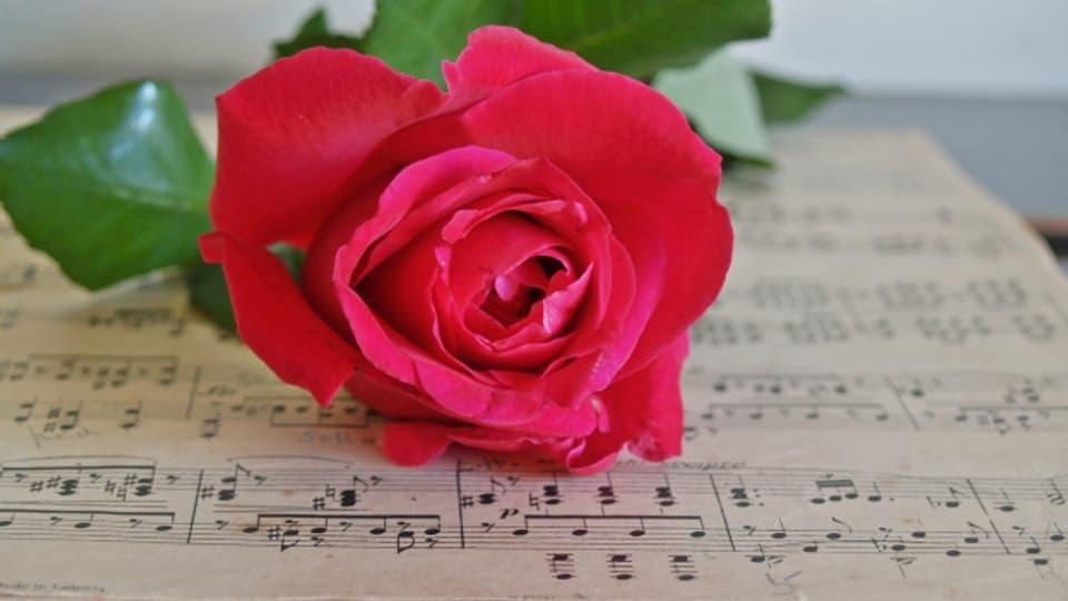 La rosa, in simbol per l'amur