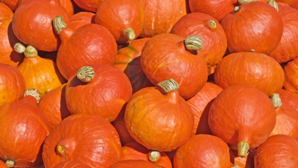 Der «orangen Knirps» auch «Hokkaido» genannt, kann man auch mit der Schale essen.