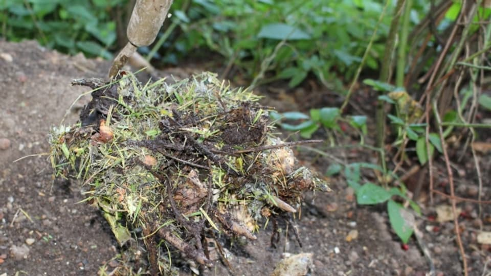 Kompostmaterial mit dem Kräuel aufladen und in den leeren bereit stehenden Kompostbehälter schütteln.
