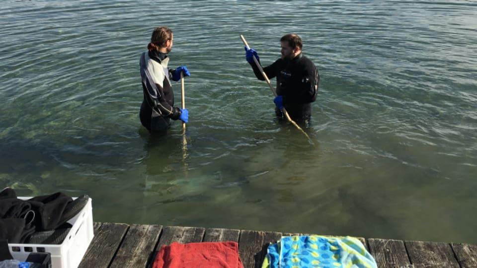 Muscheln aus dem Zürichsee - Manuel Vock und Luca Grandjean vom Zürcher Startup Umami holen asiatische Körbchenmuscheln aus dem Wasser.