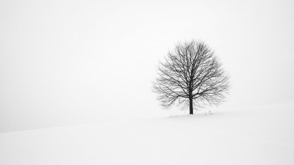 Bäume sind für viele mehr als Bäume. Sie sind verknüpft mit Erinnerungen.