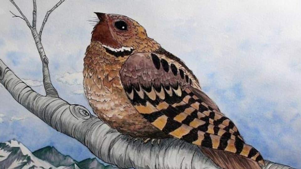 Kein anderer Vogel wird in der Country-Musik inbrünstiger besungen als der Whippoorwill, die Schwarzkehl Nachtschwalbe.