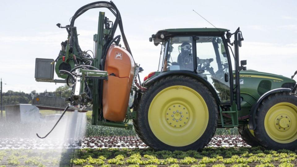 Ein Traktor bringt auf einem Salatfeld Pflanzenschutzmittel aus