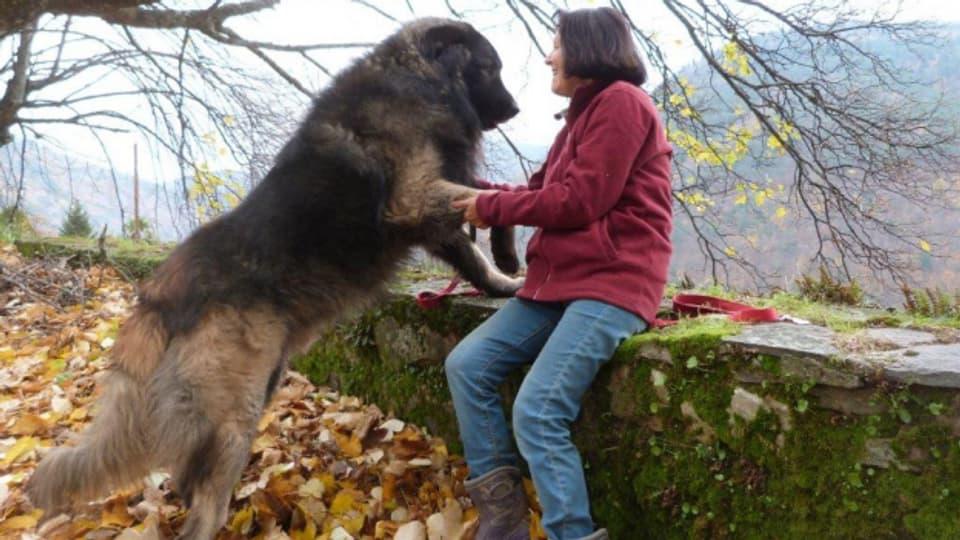 Suzette Preiswerk da Mota-Veiga züchtet erfolgreich Portugiesische Herdenhunde.