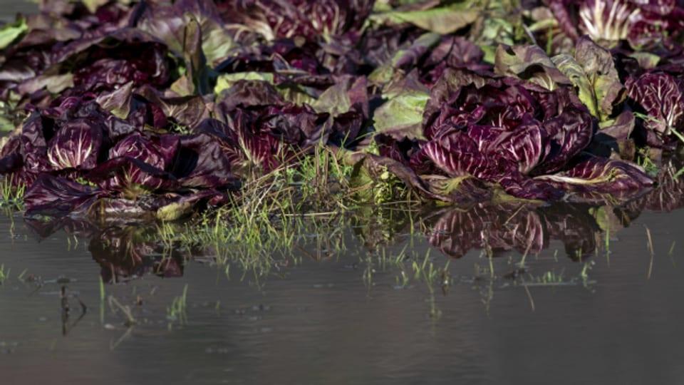 Viele Gemüsegärten in der Schweiz stehen unter Wasser