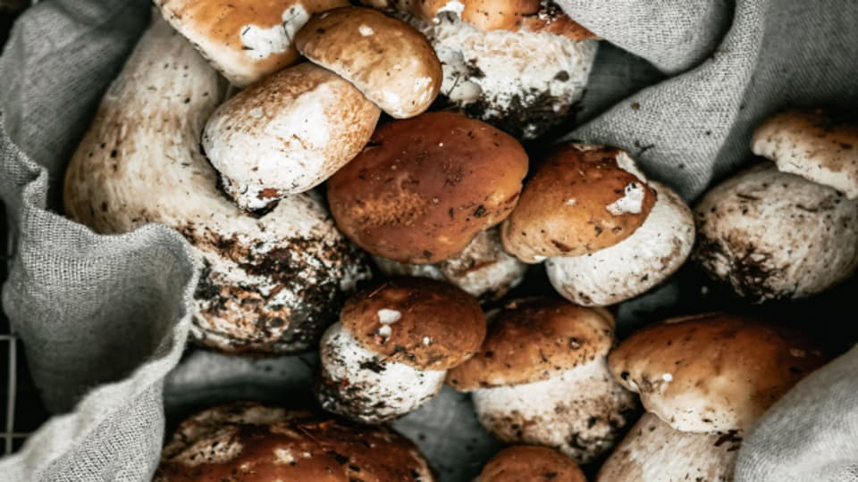 Kochen im Herbst - Mit Steinpilzen und vielen anderen Herbstgemüsen.