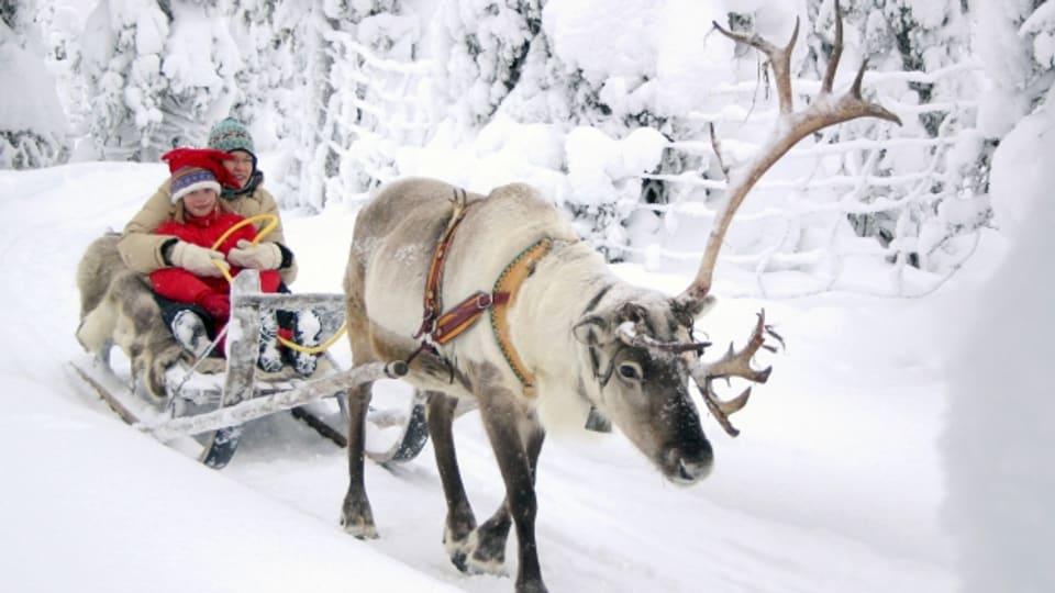 Ein Rentierschlitten in Lappland