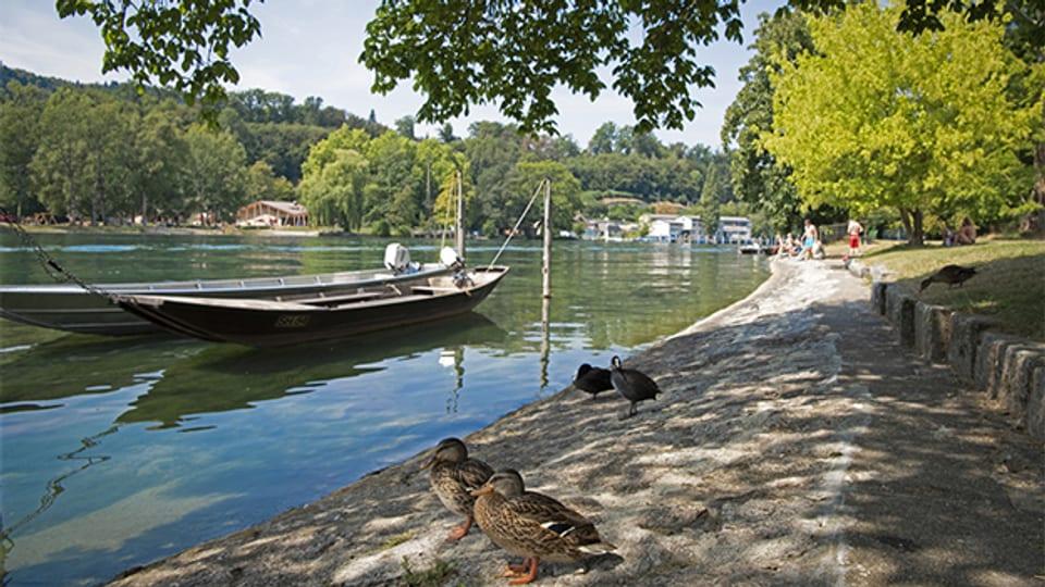 Am Rhein in Schaffhausen im Sommer.