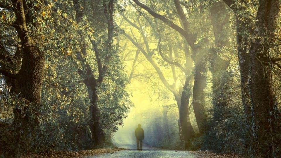 Beim spazieren geht es nicht um Körpertraining, vielmehr geht es um den Kopf.