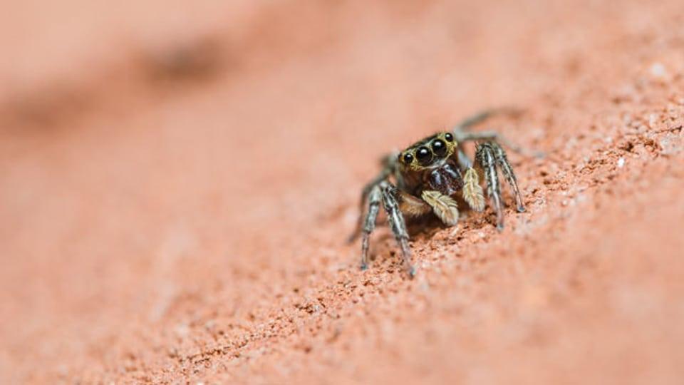 Spinnen: Sorgen bei manchen Menschen für Kreisch-Attacken.