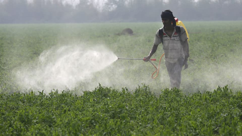Ein indischer Arbeiter spritzt Pestizide auf die Erbsenernte.