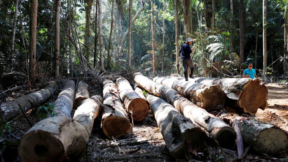 Unbegrenzter Raubbau am Amazonas-Regenwald. Hier bei Humaita im Bundesstaat Amazonas, Brasilien, 20. September 2019.