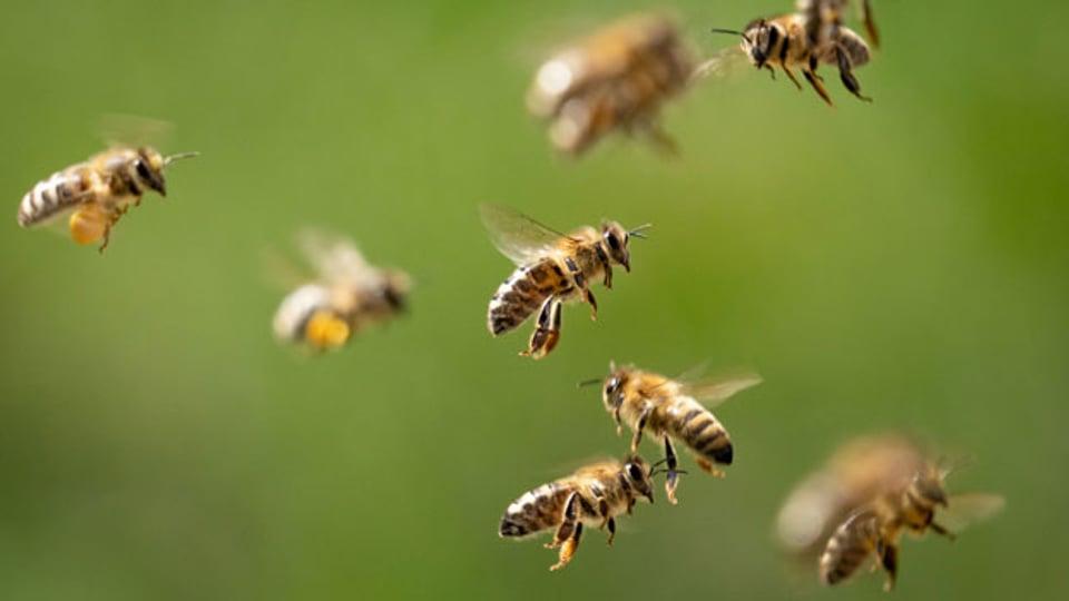 12-Punkte-Programm zum Schutz der Insekten.