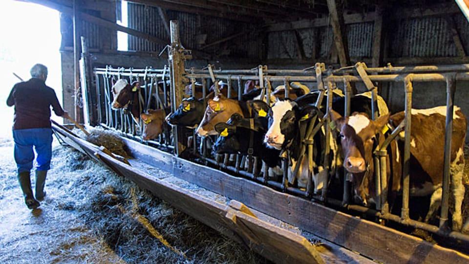 Es brauche viel einfachere Regeln, wann ein Bauer wieviel Direktzahlungen erhalte, sagt der Berner SVP-Grossrat und Bauer Thomas Knutto «je mehr Fläche und je mehr Tiere, desto mehr Geld».