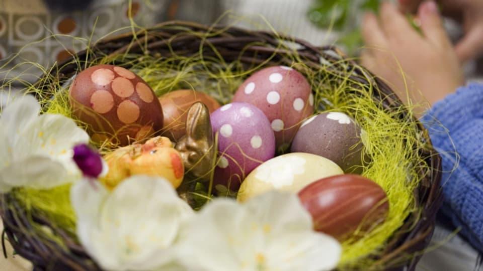 Osternest mit farbig bemalten Eiern und Schoggihase