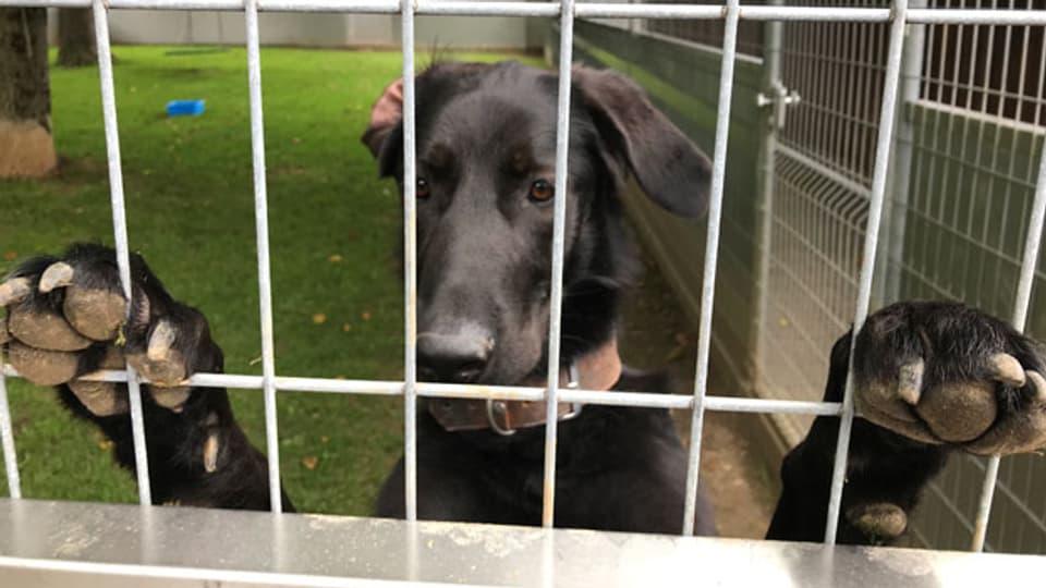 «Cosmo, ein in Covid-Zeiten überstürzt angeschaffter Hund, wurde dann ins Tierheim abgeschoben.»