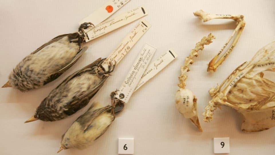 Präparate von Darwins Forschungen, ausgestellt in seinem früheren Wohnhaus.