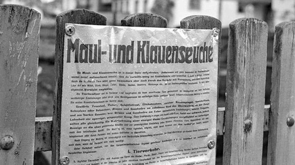 Nachdem im Frühling 1965 in der Schweiz einzelne Fälle von Maul- und Klauenseuche auftraten, breitete sich die Seuche nach dem 21. Oktober in vielen Regionen schnell aus.